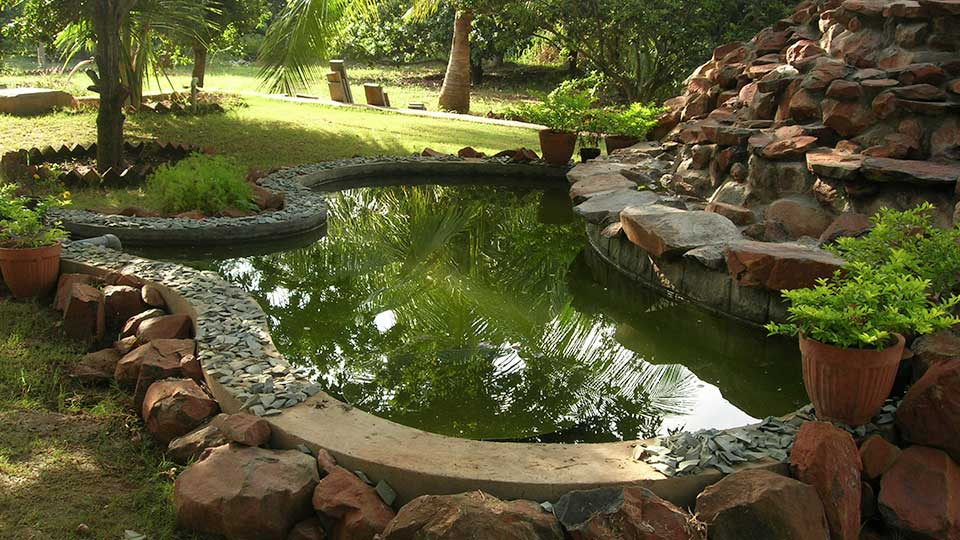 External Pond